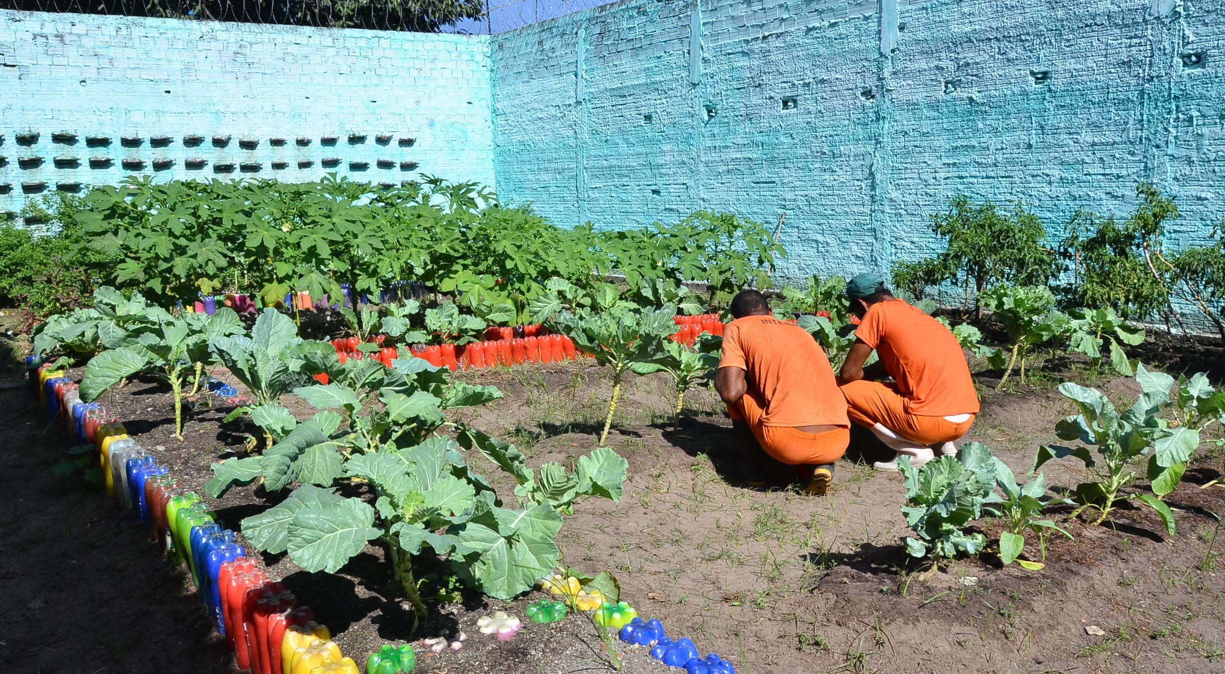 Internos cultivam hortaliças em unidade no interior do Maranhão. Foto: Clayton Monteles